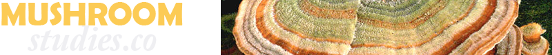 mushroomstudies_banner